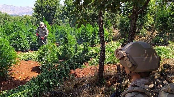 PKK, Doğu ve Güneydoğu'da vatandaşları uyuşturucuüretimine teşvik etmiş