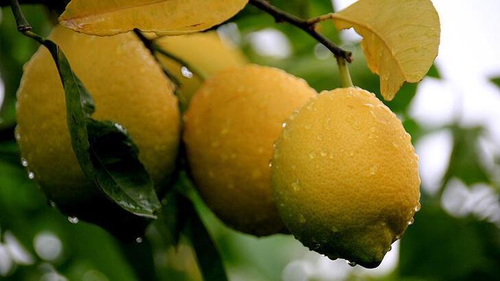 Güneyin turunçgil üretim merkezlerinden ekonomiye önemli katkı