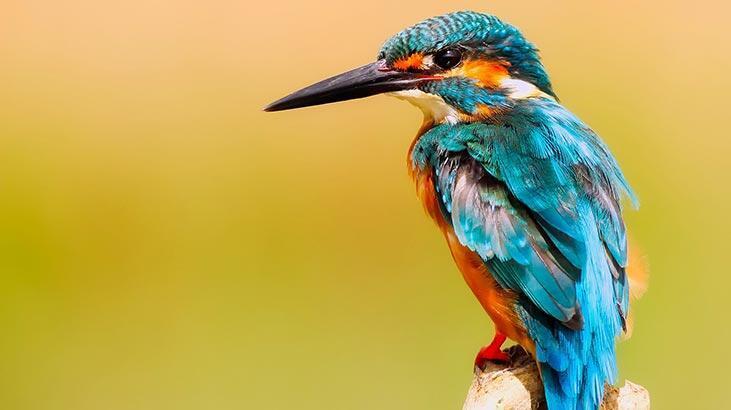 Kuş Türleri Ve İsimleri Nelerdir? Kuşların Çeşitleri İle Özellikleri