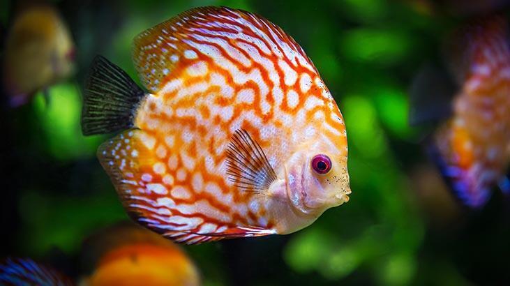 Balık Türleri Ve İsimleri Nelerdir? Balıkların Çeşitleri İle Özellikleri