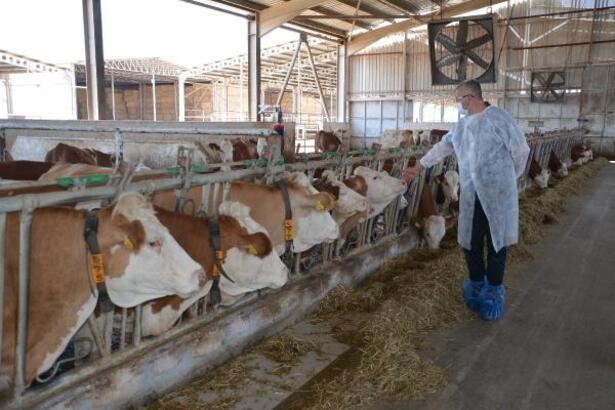 Karacabey, modern çiftlikleriyle markalaşıyor
