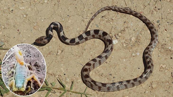 Denizli'de akrep ve yılan paniği! Onlarca kişi hastaneye koştu