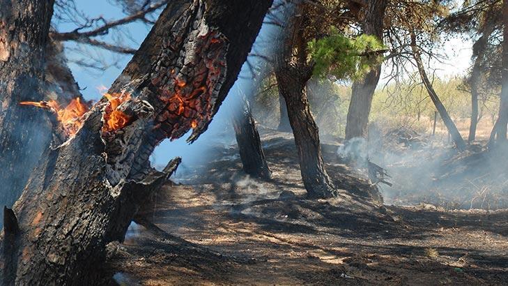 Son dakika... 12.30'da Saros'da başlayan yangın kontrol altına alındı