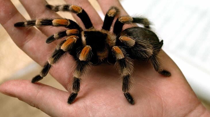 Örümcek Türleri Ve İsimleri Nelerdir? Ülkemizde Yetişen Zehirli, Zehirsiz Örümcek Çeşitleri Ve Özellikleri