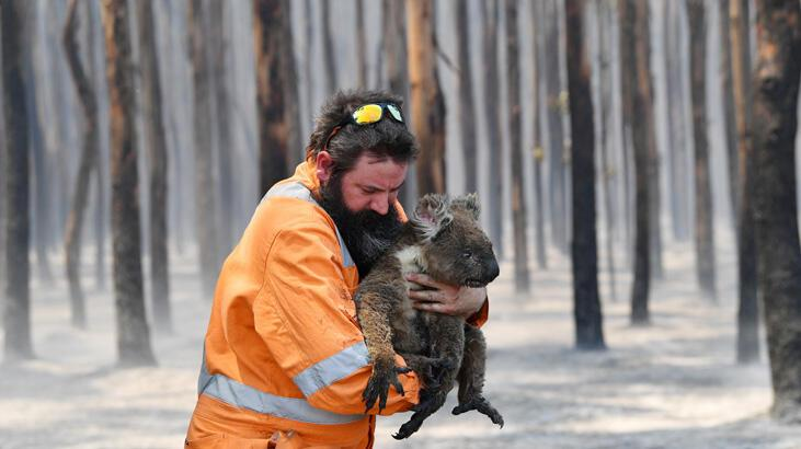 Avustralya'daki yangınlarda 3 milyar hayvan 'öldü ya da yerinden oldu'