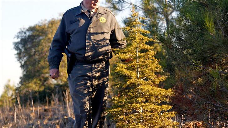 Orman Genel Müdürlüğü 700 işçi alımı | Başvuru şartları belli oldu mu, alım hangi meslek gruplarından olacak?
