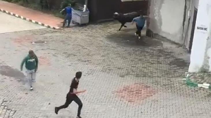 Ahırdan kaçan kurbanlık boğa vatandaşları kovaladı