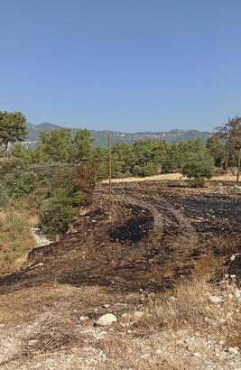 Arazi yangını ormana sıçramadan söndürüldü