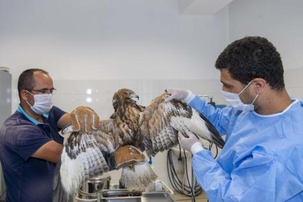 Kayseri'de yaralı hayvanlara Büyükşehir Belediyesi sahip çıkıyor
