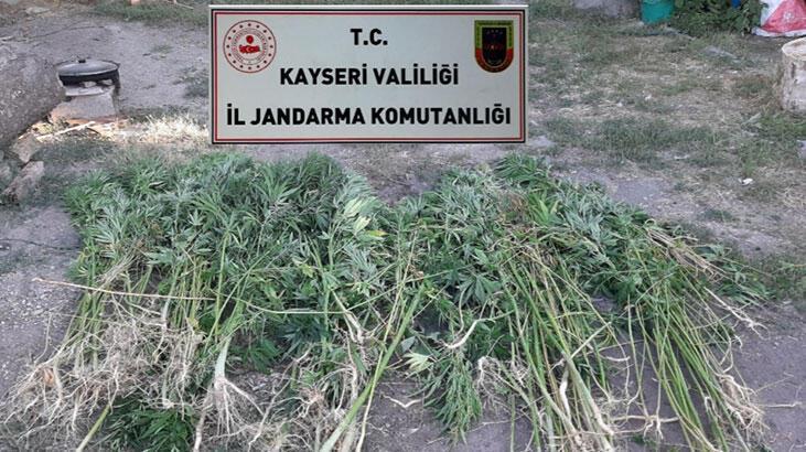 Kayseri'de evin bahçesinde, 236 kök Hint keneviri ele geçirildi