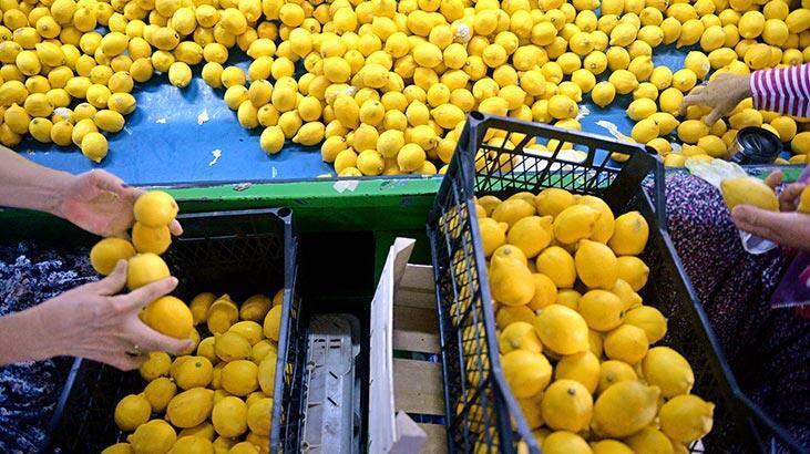İhracatçı limon iznine sevindi