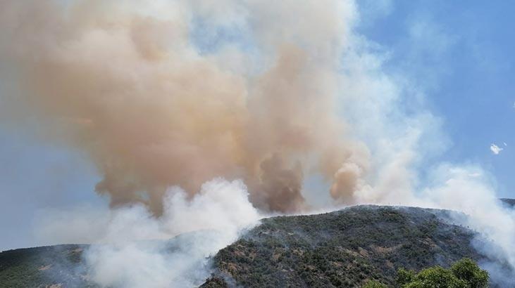 Son dakika! Elazığ'da orman yangını! Kısa sürede büyüdü