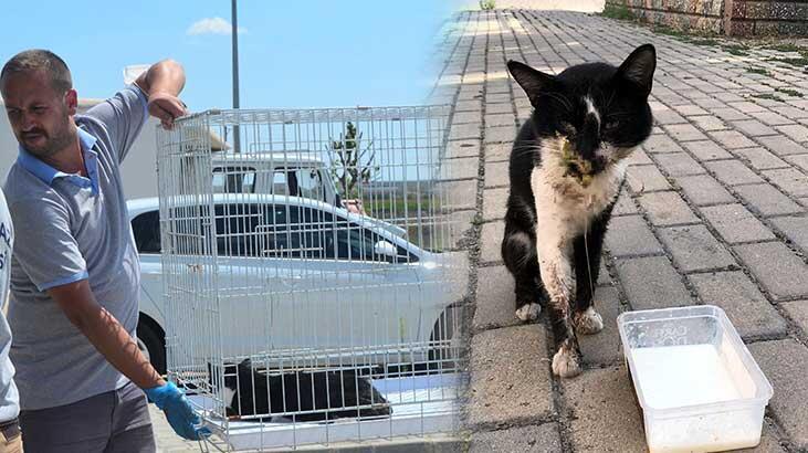 Kırklareli'de yaralı kedi, hayata döndürüldü
