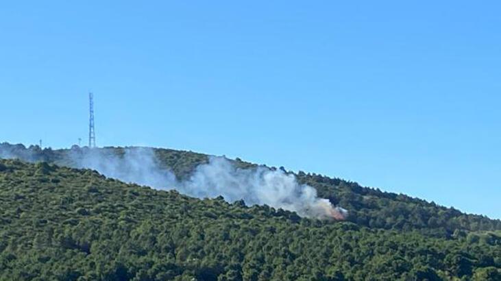 Son dakika...  İstanbul'da orman yangını! Kontrol altına alındı