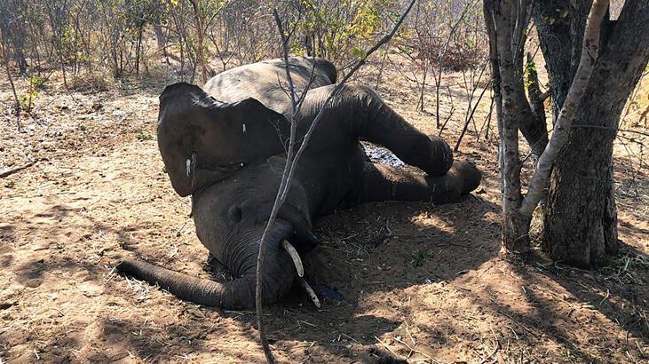 Filler gizemli şekilde ölüyor