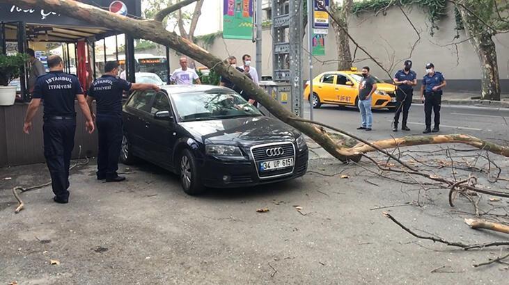 Çırağan Caddesi'nde asırlık ağacın kırılan dalı taksi durağının üzerine düştü