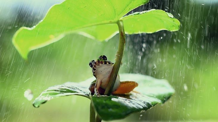 Falda Kurbağa Görmek Ne Demek? Kahve Falında Kurbağa Şekli Çıkması Ne Anlama Gelir?
