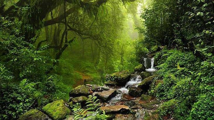 Dünya Yağmur Ormanları Haritası: Ekvatoral Ve Tropikal Yağmur Ormanları Hakkında Bilgiler