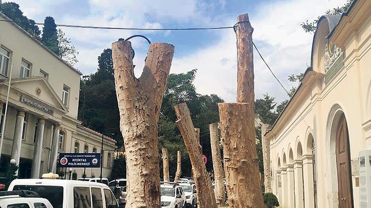 Beşiktaş'ta ağaç tartışması