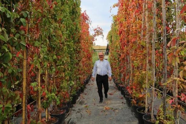 Sivas'ta yeşil alanlar tasarruflu sistemle sulanacak