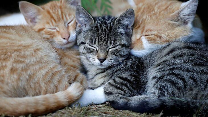110 kedisiyle birlikte oturduğu evden tahliye edildi