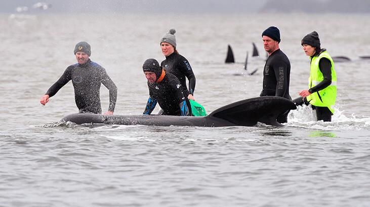 Karaya vuran balinalardan en az 90'ı öldü