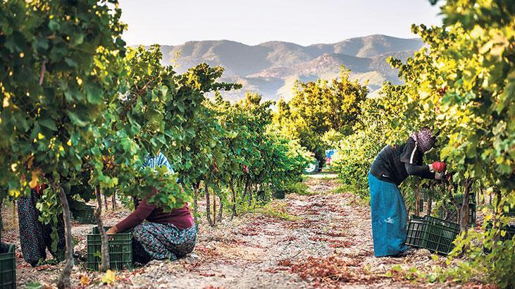 Organik tarıma kadın dokunuşu
