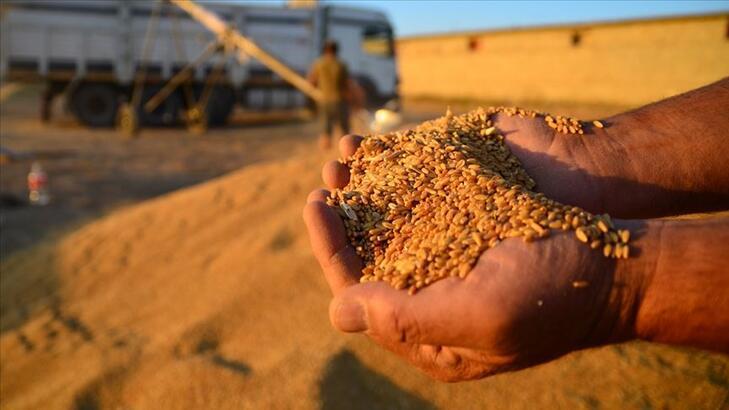 Buğdaydaki üretim artışı gelecek yıl da sürecek