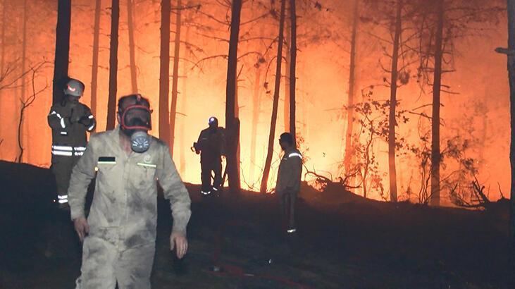 Pendik'te ormanlık alanda yangın! Kısmen kontrol altına alındı