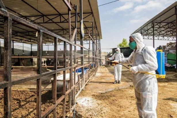 Mersin'de üçgün hastalığı için önlem