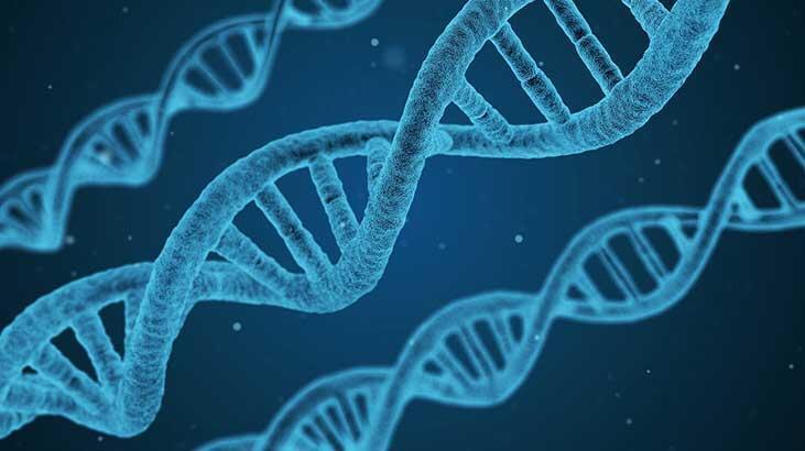 Ağır koronavirüs vakalarından Neandertal genleri sorumlu olabilir