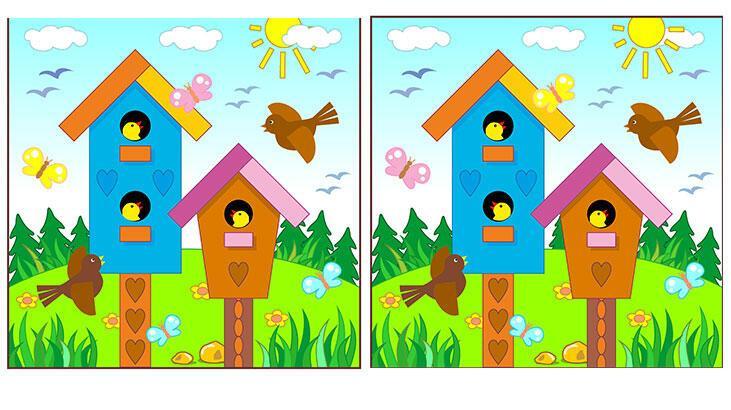 Kuş evleri farklıymış