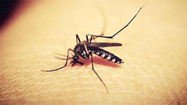 Sivrisinek takip sistemi geliyor