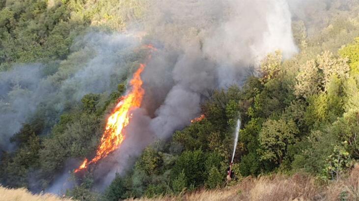 Gemlik'te orman yangını, 1 saatte kontrol altına alındı