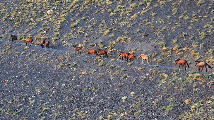 Hakkari'de yılkı atları, dronela görüntülendi