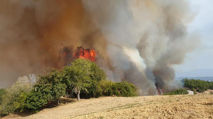 Osmaniye'de ormanlık alanda yangın! Alevler evlere de sıçradı