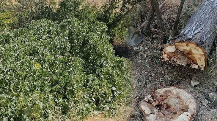 Elazığ'da üzerine ağaç devrilen kadın öldü!