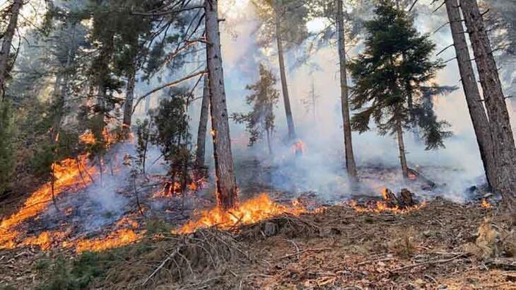 Son dakika... Adana'daki orman yangınlarıyla ilgili 4 gözaltı