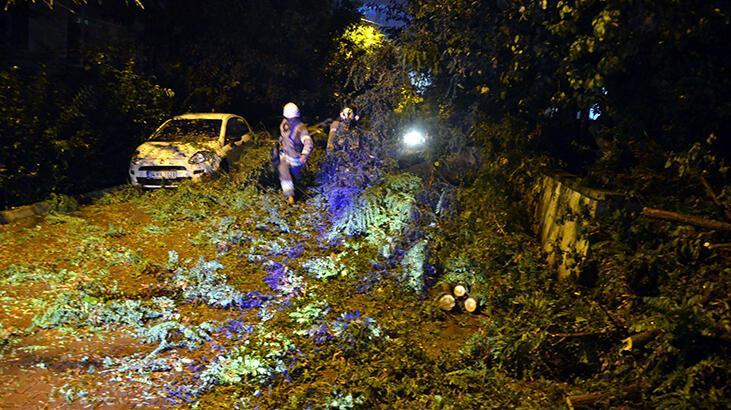 Avcılar'da rüzgarın devirdiği ağacın altında kalmaktan son anda kurtuldular