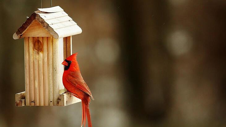 Kuşlara kış evi nasıl yapılır?