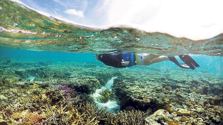Mercan kıyımı