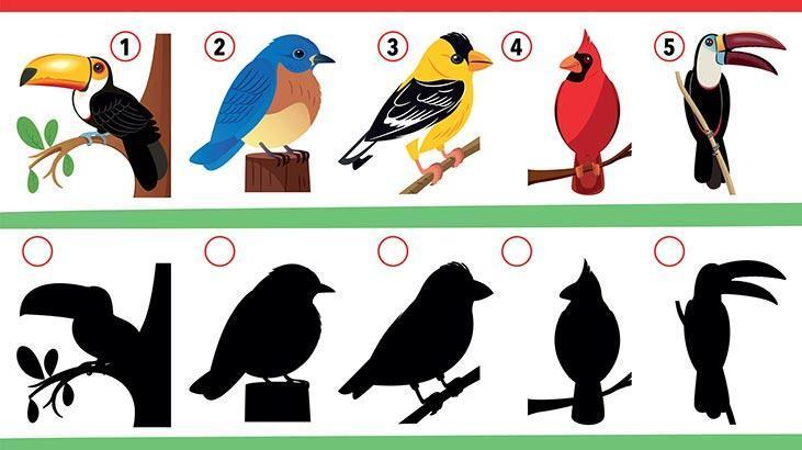 Kuşların gölgesi kayıp