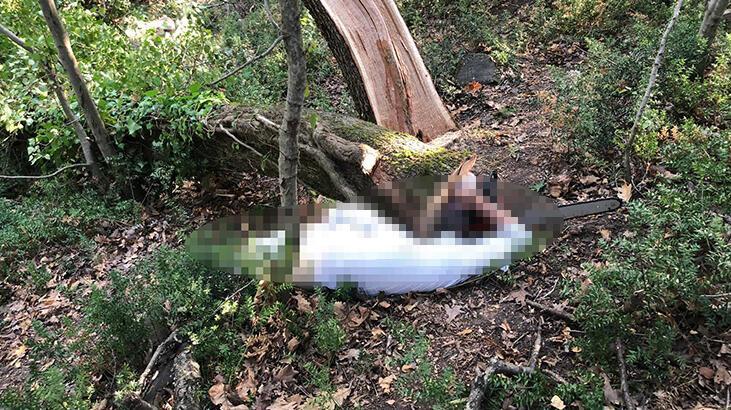 Kestiği ağacın altında feci ölüm