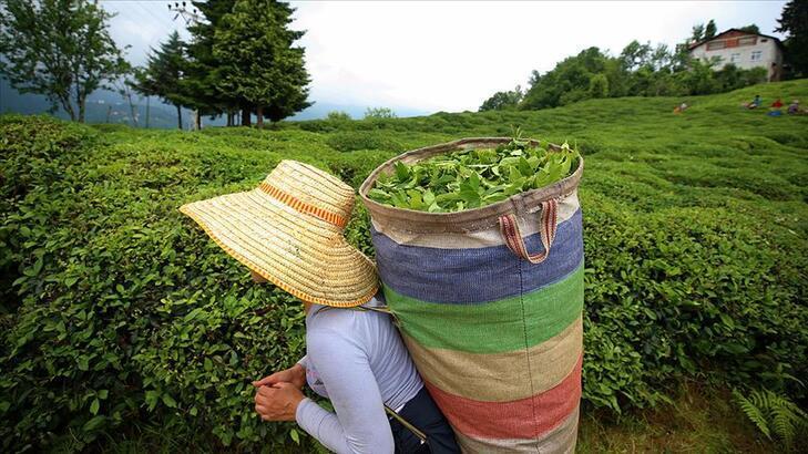 Rize çay ihracatından 9 ayda 6,4 milyon dolar kazandı