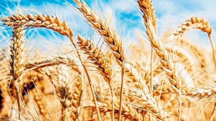 'Alakasız' stokçuya buğday, arpa resti!