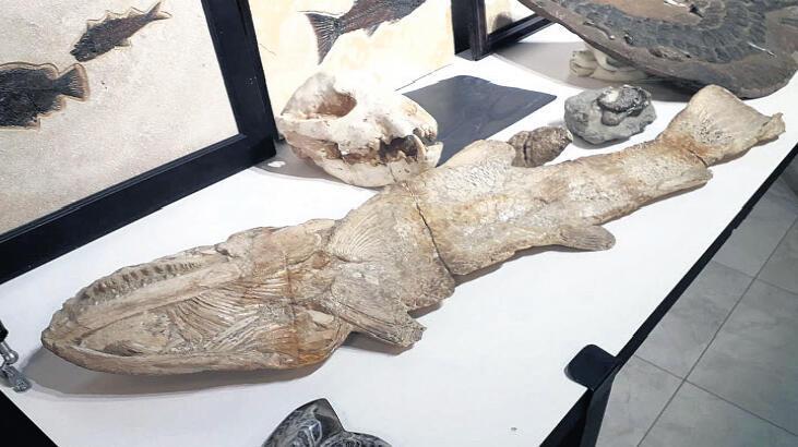 Oktar'ın evlerinde 879 'kaçak' fosil!