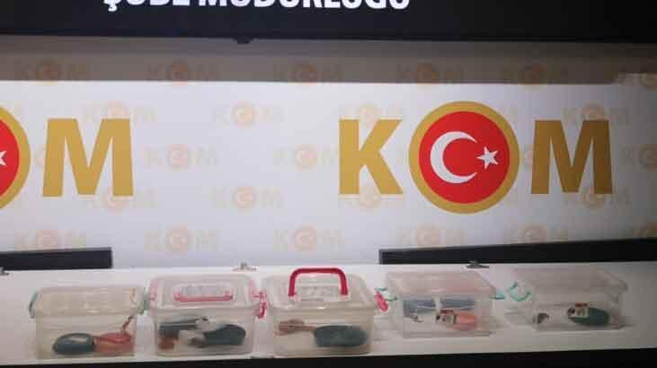 Ankara'da 5 Mısır yılanı ele geçirildi!