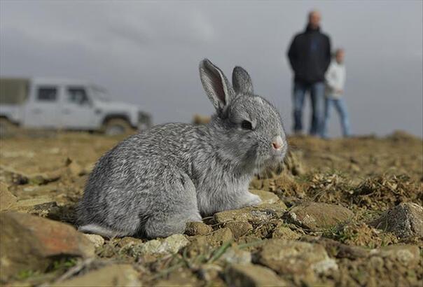 Tavşanın Kaç Ayağı Ve Kaç Dişi Vardır? Kısaca Tavşanların Özellikleri