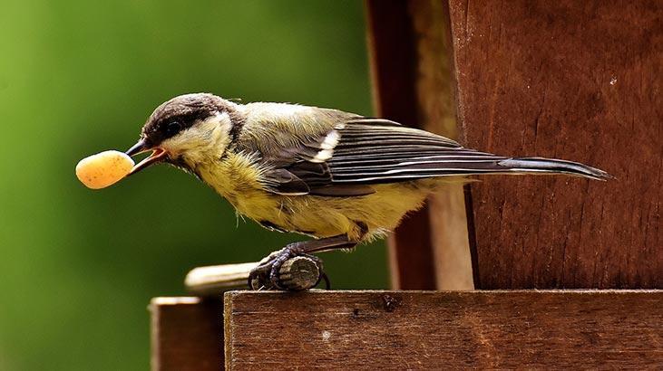 Kuşlara kışlık yiyecek hazırlayalım!