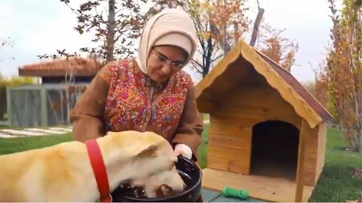 Emine Erdoğan'ın sahiplendiği 'Leblebi' Külliye bahçesinde